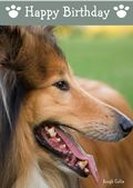 Rough Collie-Happy Birthday (No Theme)